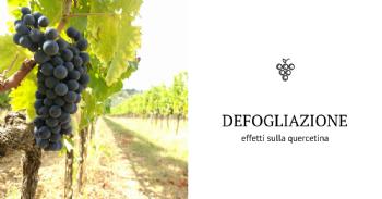 Effetto della defogliazione precoce sulla composizione dei glicosidi della quercetina nelle uve Sangiovese