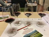"The future typicity of ""Colli Piacentini"" region: tasting of ERVI wines"