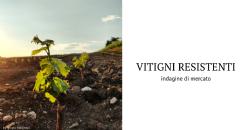 I consumatori di vino chiedono salubrità e sostenibilità ambientale!