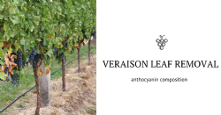 Veraison leaf removal modify anthocyanin and flavonol profile in four Vitis vinifera L. cultivars