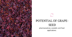 Circular economy in the wine sector: assessment of the potential of seeds of Portuguese grape varieties for oil production and by-products development