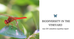 Functional biodiversity in the Vineyard