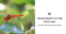 Functional biodiversity in the Vineyard