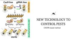 New CRISPR-based Technology Developed to Control Pests with Precision-guided Genetics