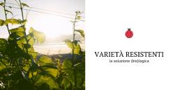 Varietà resistenti – la soluzione (bio)logica per viticoltura sostenibile
