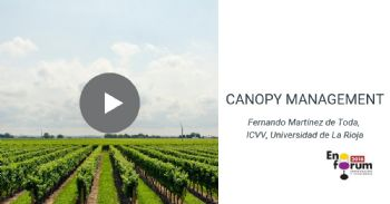 Vineyard techniques of canopy management to mitigate the effects of global warming