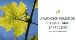 Mejora del aroma de los vinos de Monastrell mediante la aplicación foliar de rutina y trigo sarraceno en el viñedo