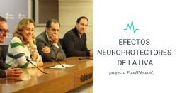 Investigan los efectos neuroprotectores de la uva sobre las enfermedades neurodegenerativas