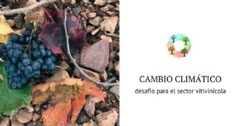 Monografico sobre el desafío del cambio climático para el sector vitivinícola