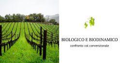 Biologico e biodinamico in sperimentazione pluriennale. Aggiornamenti su Pinot bianco e Riesling in Trentino