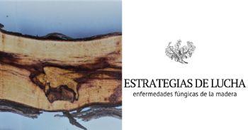 Proyecto para desarrollar nuevas estrategias en el manejo de las enfermedades fúngicas de la madera de la vid