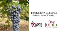 Expansion and enhancement of varietal biodiversity of the