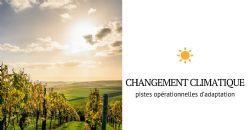 « Laccave », des vins adaptés au climat de demain