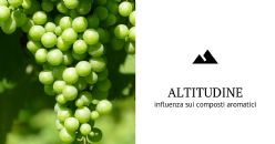 Influenza del clima a diverse altitudini sui composti aromatici dell'uva glera e sul profilo del vino