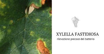 Messo a punto un test per la diagnosi precoce di Xylella fastidiosa