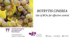 Uso de agentes de biocontrol para prevenir infecciones de Botrytis cinerea en viñedos