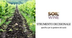 New decision support tool for soil management in viticulture