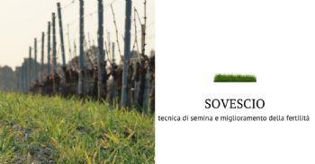 Sovescio, tecnica di semina e preparazione del terreno in viticoltura