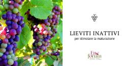 Applicazione fogliare Lallemand all'invaiatura per stimolare la maturazione fenolica ed aromatica delle uve