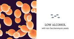 Sviluppare la qualità mediante lieviti non Saccharomyces: nuove applicazioni