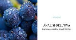 L'analisi dell'uva per un vino di qualità