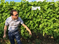 Prof. Matteo Gatti (Unicatt) presenta le principali proprietà del grappolo di Ervi