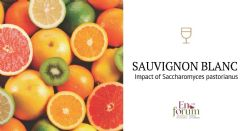 Selezione e ibridazione di ceppi di lievito per modulare composti chiave nei vini
