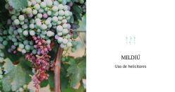 Controllo biologico di Plasmopara viticola in Vitis vinifera mediante Composti Organici Volatili Microbici