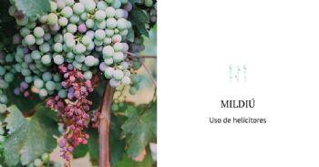El control biológico de Plasmopara viticola en Vitis vinifera mediante Compuestos Orgánicos Volátiles microbianos