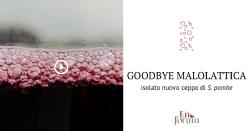 Addio fermentazione malolattica! Lieviti di ultima generazione.