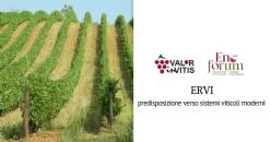 "From Ervi the new opportunities for the viticulture of ""Colli Piacentini"" wine district"