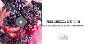 Gestire la freschezza acidica mediante preinoculo con uno specifico ceppo non-Saccharomyces