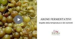 Impatto dei parametri di fermentazione sulla cinetica di sintesi degli aromi fermentativi