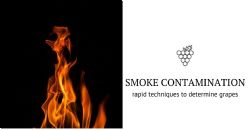 Researchers develop a non-invasive test for smoke contamination in vineyards