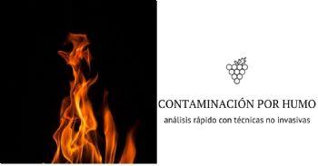 Investigadores desarrollan una prueba no invasiva de contaminación por humo en viñedos