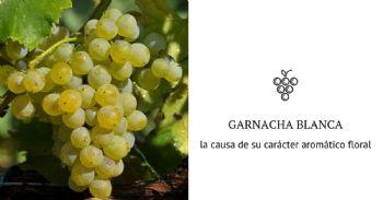 """La pérdida del color de la uva en Garnacha Blanca se debe a una mutación genética que potencia su """"carácter aromático floral"""""""