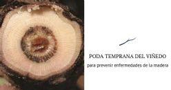 La poda temprana del viñedo puede ayudar a prevenir enfermedades de la madera