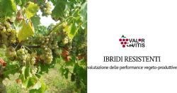 Evaluation of the vegetative and productive performance of resistant hybrids in the Colli Piacentini area