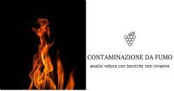 Sviluppato un test non invasivo per rilevare la contaminazione da fumo nei vigneti