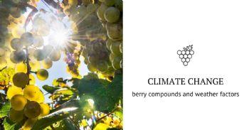 Vitis vinifera facing climate change