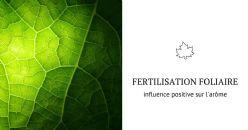 Fertilisation foliaire et arôme du vin