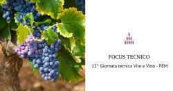 12ª Giornata tecnica Vite e Vino: calo della produzione, ma grande annata per basi spumante e vini da invecchiamento