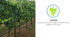The ADAM project - climate change ADAptation with Multifunctional irrigation for viticulture