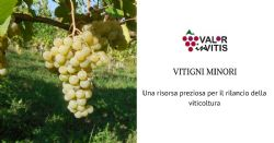 Minor cultivars, a precious resource for the relaunch of the viticulture in Colli Piacentini wine district