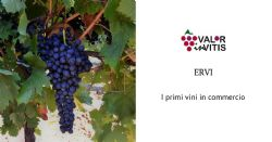 ERVI, i primi vini in commercio