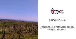 "ValorInVitis: positive results for the first Operational Group totally dedicated to the viticulture of ""Colli Piacentini"" wine district"