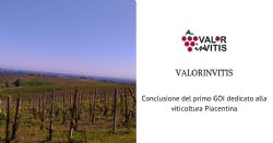 ValorInVitis: positive results for the first Operational Group totally dedicated to the viticulture of