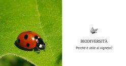 Biodiversità funzionale nel vigneto