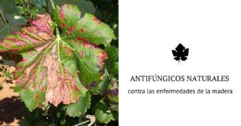 Sustancias naturales potencialmente eficaces para combatir a las enfermedades de la madera de la vid