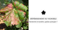 Plan National Dépérissement du Vignoble:  chercheurs et techniciens mobilisés à Beaune